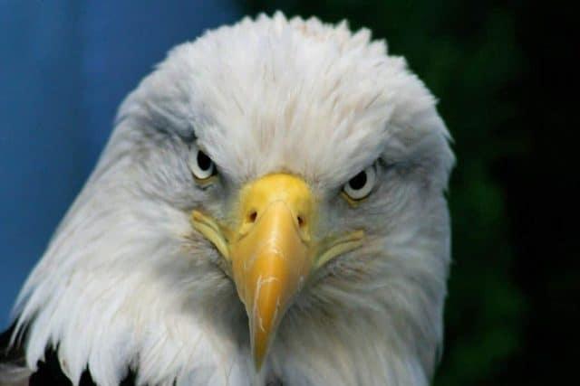 Que signifie rêver d'aigle ?