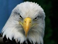 Le symbole de aigle dans un rêve