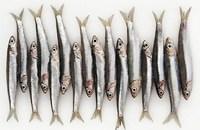 Que signifie un rêve d'anchois ?