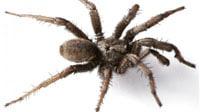 Rêver d'araignée morte