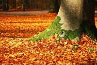 Rêver d'automne en Islam