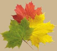 Les feuilles de l'arbre vues en rêve