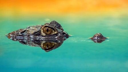 Rêver d'alligator interprétation