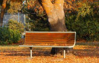 Rêver de banc sous un arbre