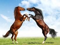Rêver de cheval et son interprétation