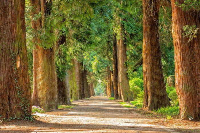 Le rêve de bois et sa signification: