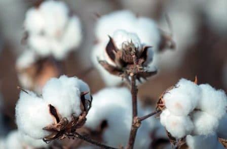 Rêver de coton interprétation