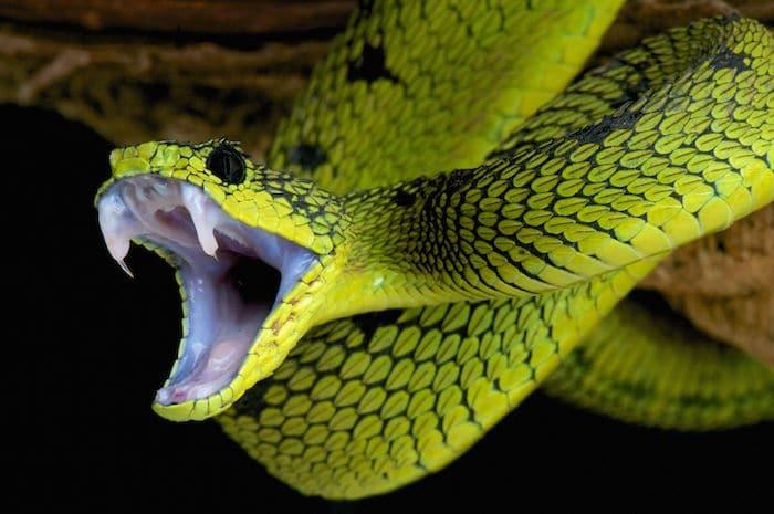 Le rêve d'une attaque de serpent et sa signification: