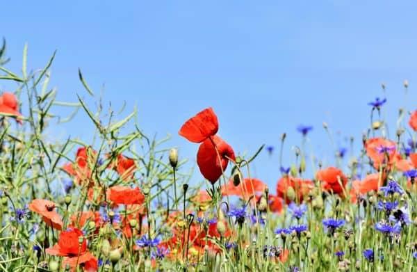 Que signifie rêver de fleurs ?
