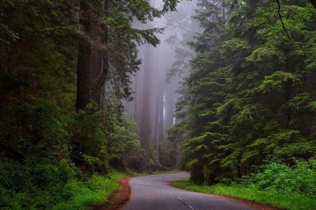 Que signifie rêver de forêt ?