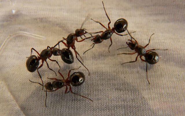 Que signifie rêver de fourmis ?