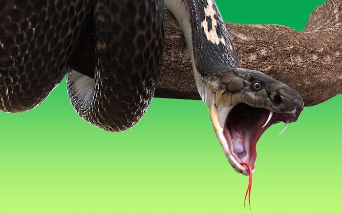 Que signifie rêver de morsures de serpent ?