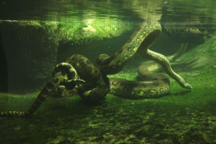 Le rêve de serpents dans l'eau et sa signification: