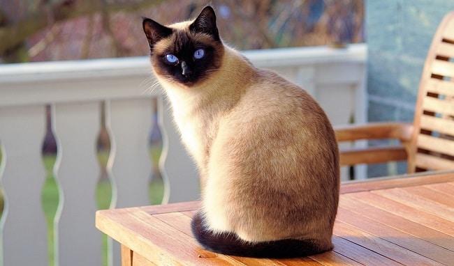 Le rêve de chat et son interprétation: