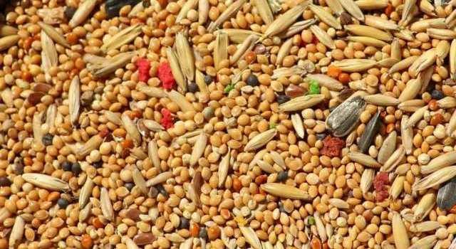 Que signifie rêver de grains ?