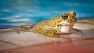 Rêver de grenouille et son interprétation: