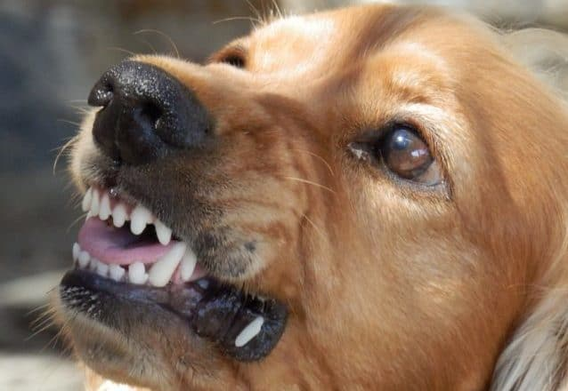 Que signifie rêver de morsures de chien ?