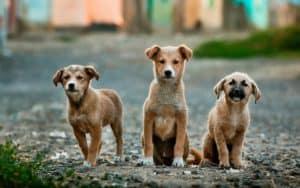 Rêver de races de chien