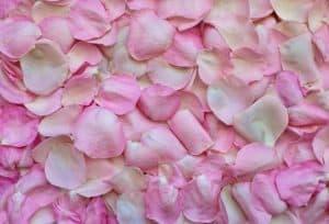Rêver de la couleur rose et son interprétation: