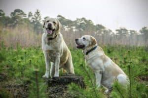 Taille et couleur du chien vu en rêve:
