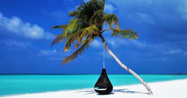 Que signifie rêver de palmier ?