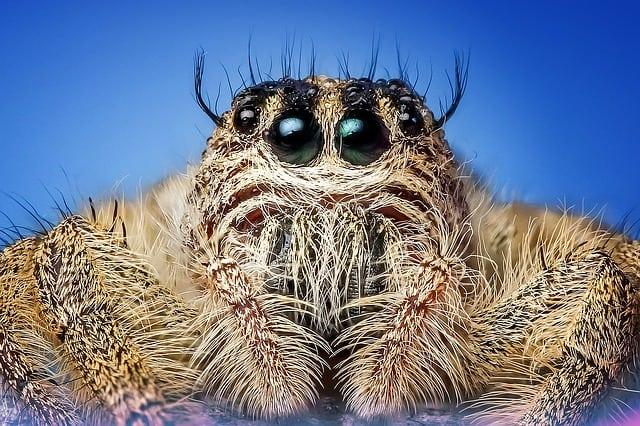 Que signifie rêver d'araignée ?