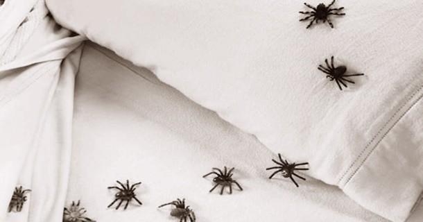 Rêver d'araignées dans son lit et son interprétation: