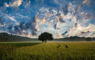 Rêver d'arbre et son interprétation exacte: