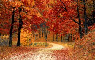 Rêver d'arbre et de feuilles:
