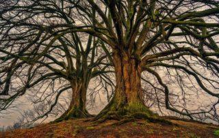 Rêver d'arbres morts: