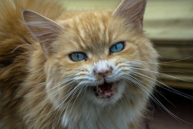 Que signifie rêver d'être mordu par un chat ?