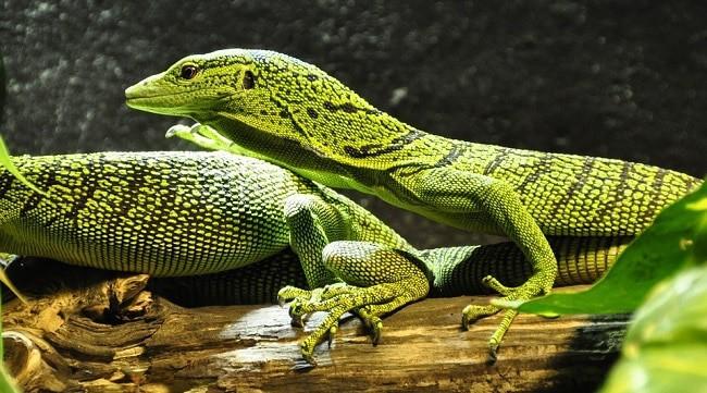 Que signifie rêver de reptile ?