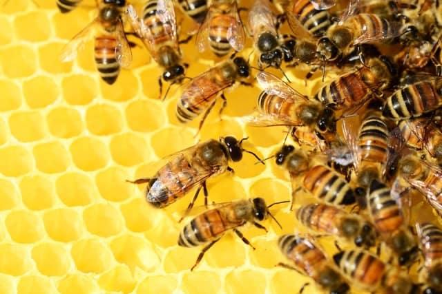 Que signifie rêver d'abeille ?
