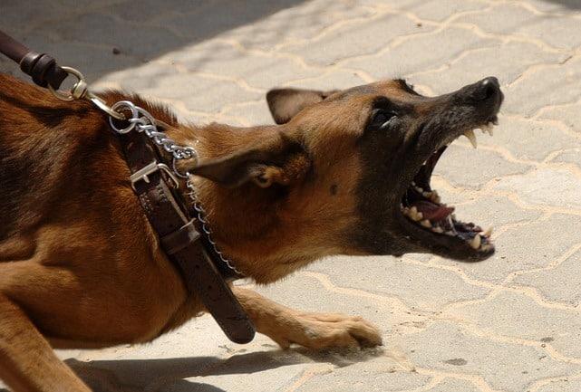 Le rêve d'attaque de chien et sa signification: