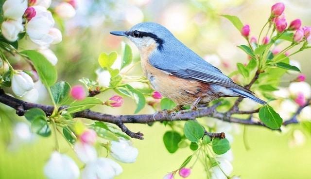Le rêve d'oiseaux et sa signification:
