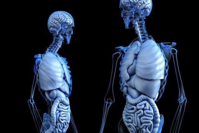 Le rêve d'organes et sa signification: