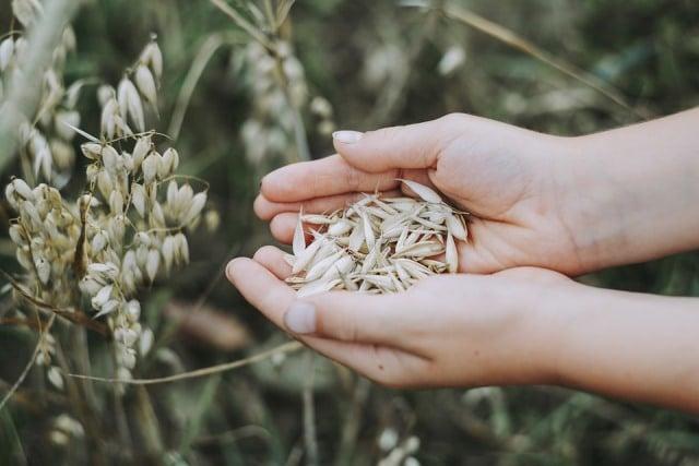 Rêver de récoltes et sa signification: