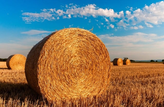 Rêver de récolter et sa signification: