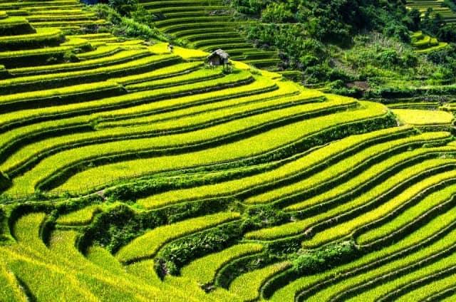 Le rêve de rizière et sa signification: