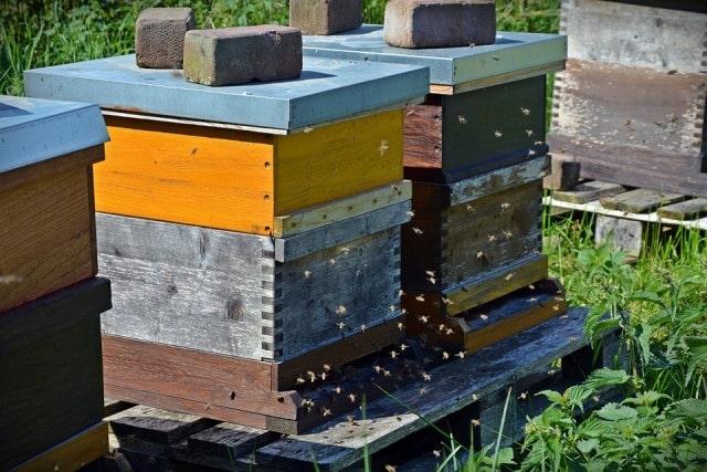 Le rêve de ruche et sa signification: