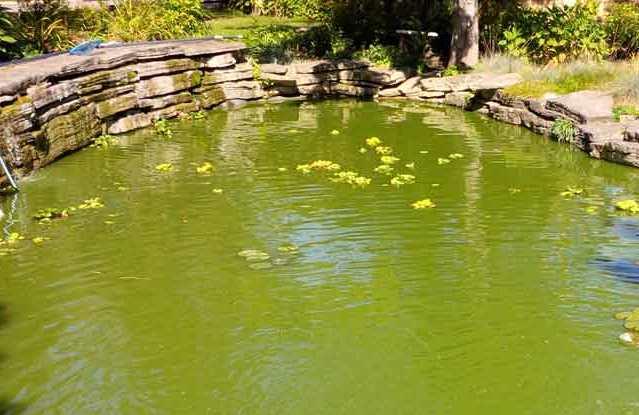 Que signifie un rêve d'eau verte ?