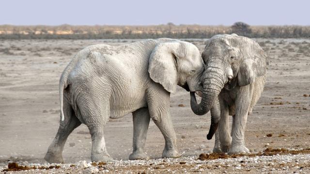Que signifie un rêve d'éléphant ?