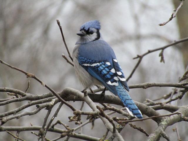 Que signifie un rêve d'oiseau bleu ?