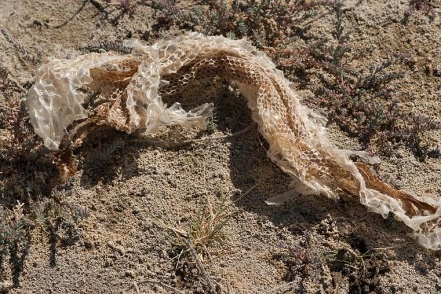 Que signifie un rêve de serpent mort ?