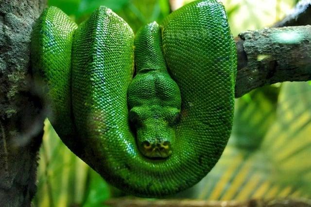 Que signifie un rêve d'un gros serpent ?