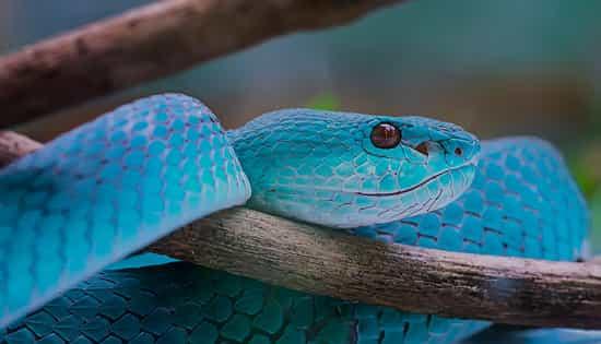 Que signifie un rêve de serpent bleu ?