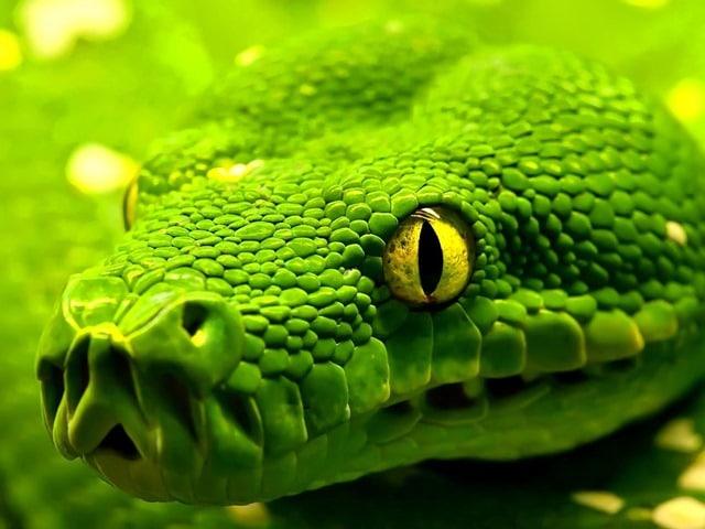 Que signifie un rêve de serpent vert ?