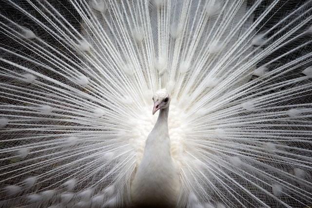 Que signifie un rêve d'oiseau blanc ?