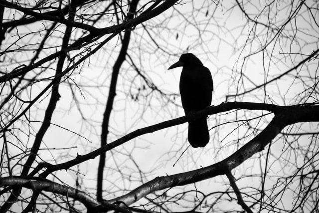 Que signifie un rêve d'oiseau noir ?