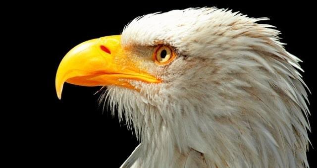 Que signifie un rêve de manger un aigle ?